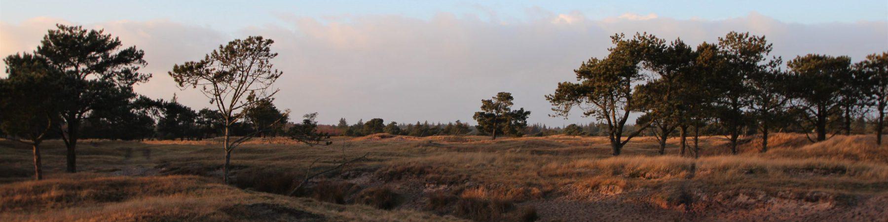 Røgegård reservat